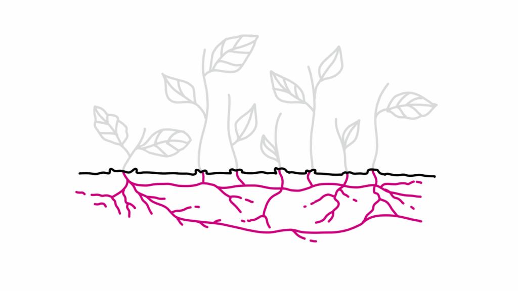 Advieskunst wortelstokmodel