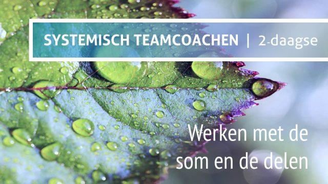 Module Systemisch Teamcoachen Teamchange