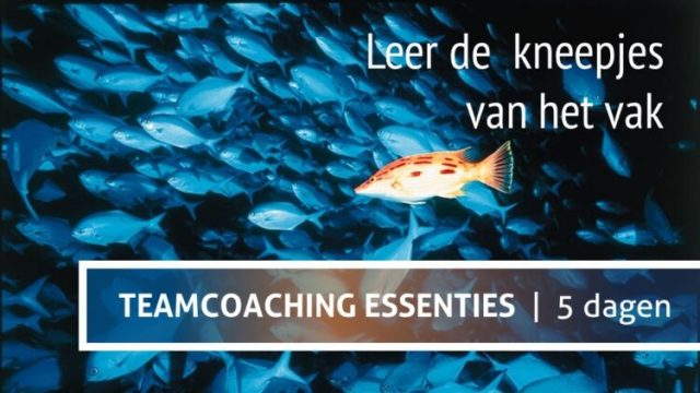 teamcoach worden in complete opleiding